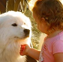 Ежегодная выставка собак стала Парадом животных