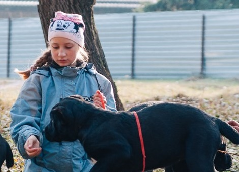 В Фельдман Экопарк открылась Школа юного хендлера