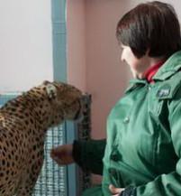 В Фельдман Экопарк поселилась новая пара гепардов