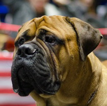 One of the biggest Ukrainian dog shows took place in Kharkiv
