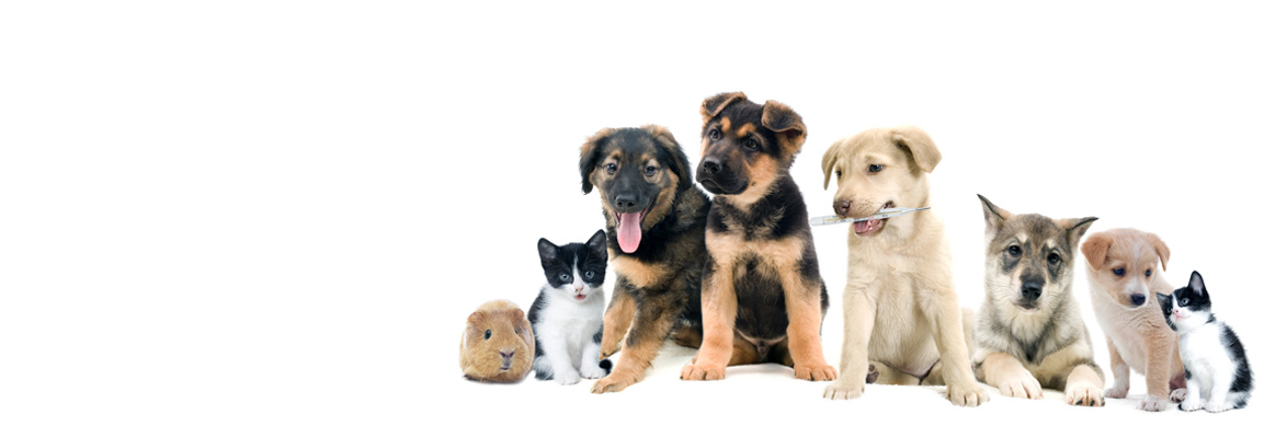 Благодаря «Доброму дому Фельдман Экопарк» свой дом нашли 15 тысяч животных