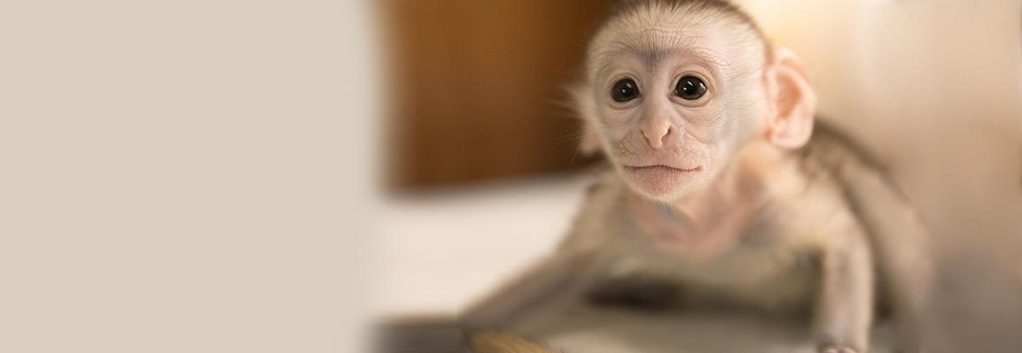 В Фельдман Экопарк первое в этом году обезьянье пополнение