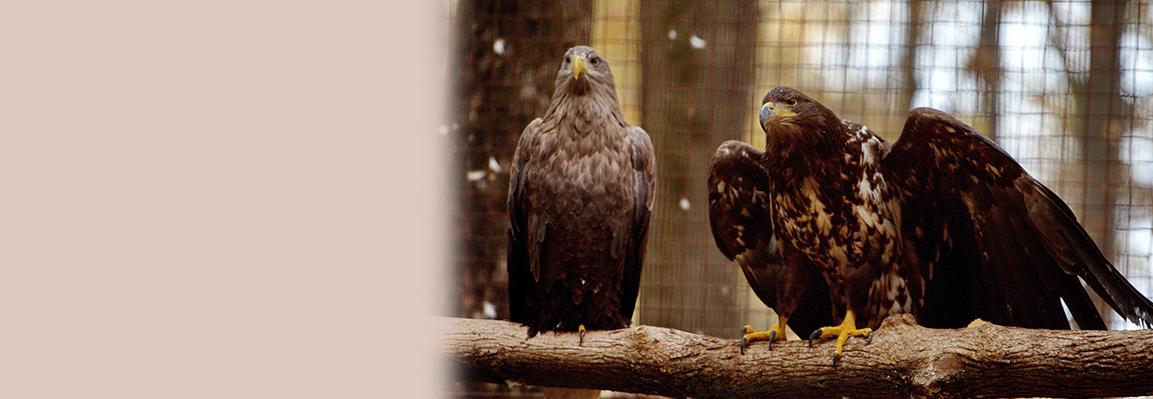 У Фельдман Екопарк з'явиться Парк птахів