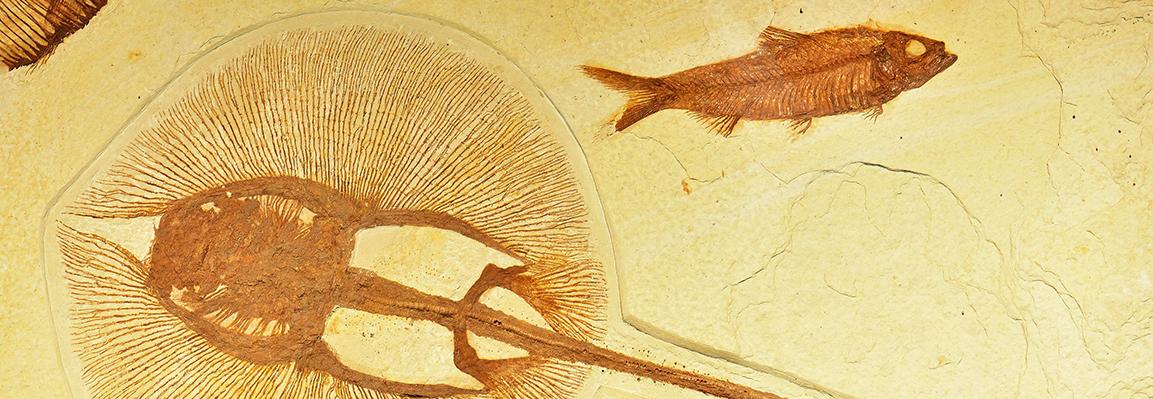Унікальна виставка «Літопис планети» відкрилася у Галереї «АВЕК»