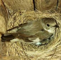 В Фельдман Экопарк студенты-орнитологи четвертый год реализуют проект «Сохраним птиц вместе»